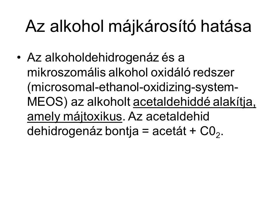 Az alkohol májkárosító hatása