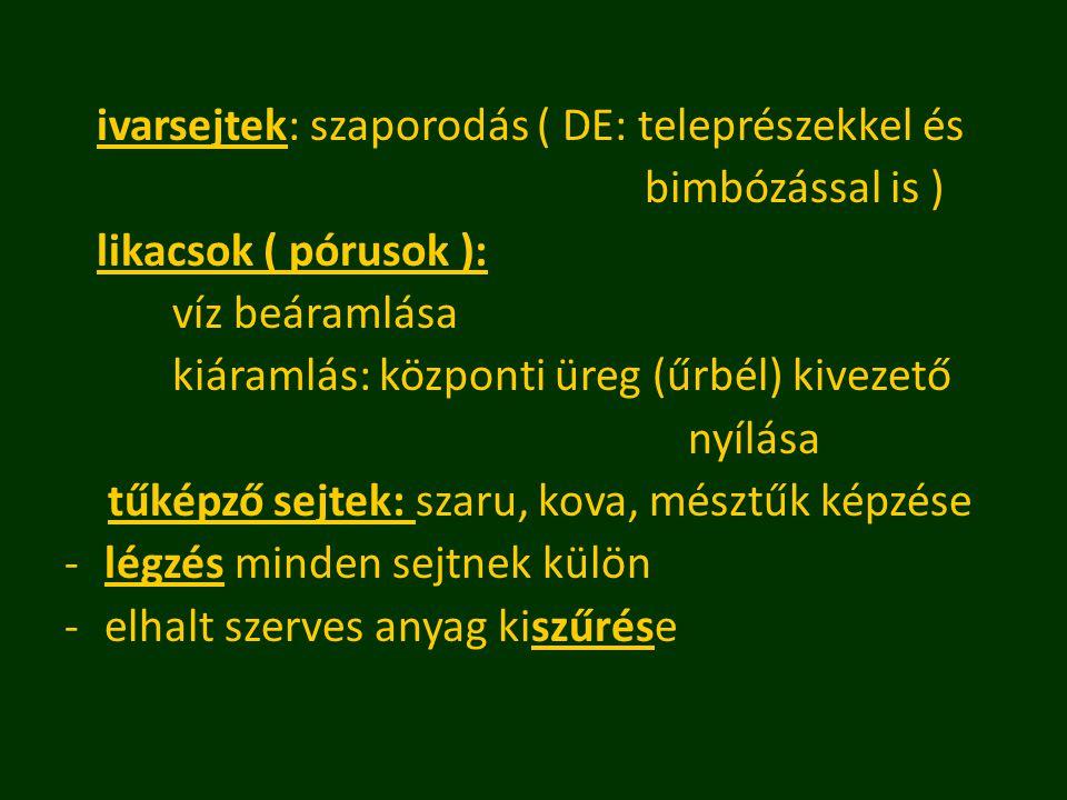 ivarsejtek: szaporodás ( DE: teleprészekkel és