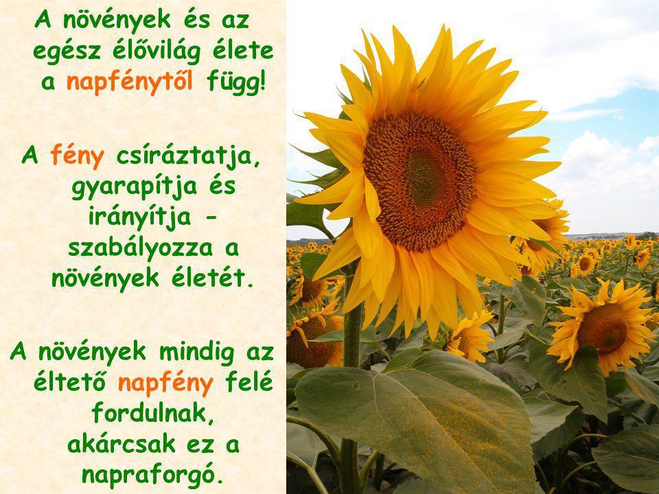 A növények és az egész élővilág élete a napfénytől függ!
