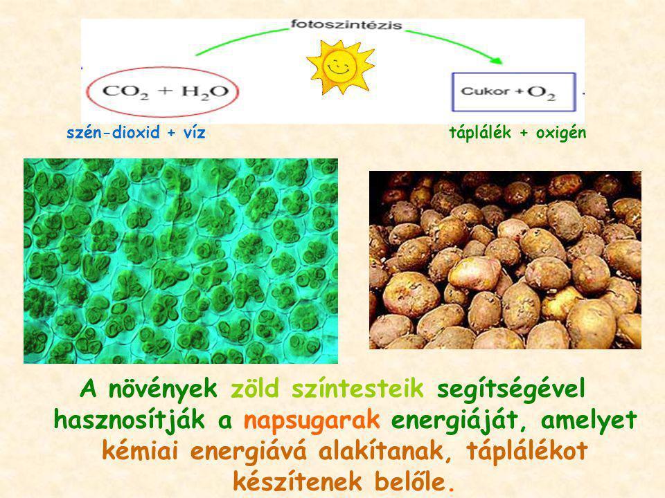 szén-dioxid + víz táplálék + oxigén.