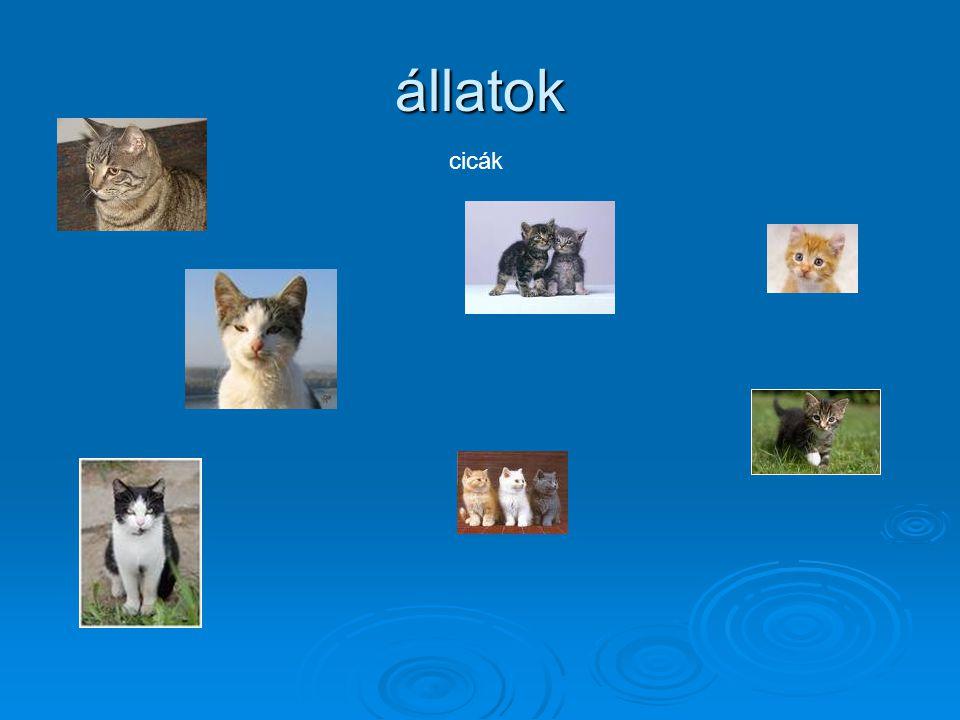állatok cicák