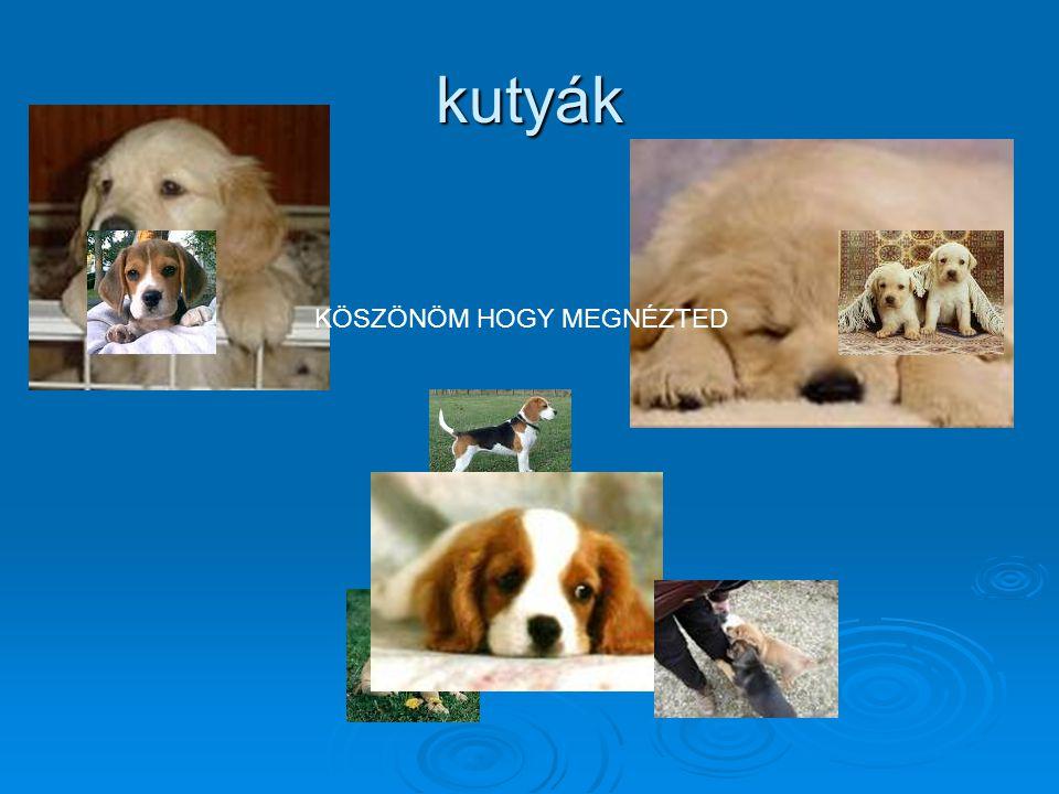 kutyák KÖSZÖNÖM HOGY MEGNÉZTED
