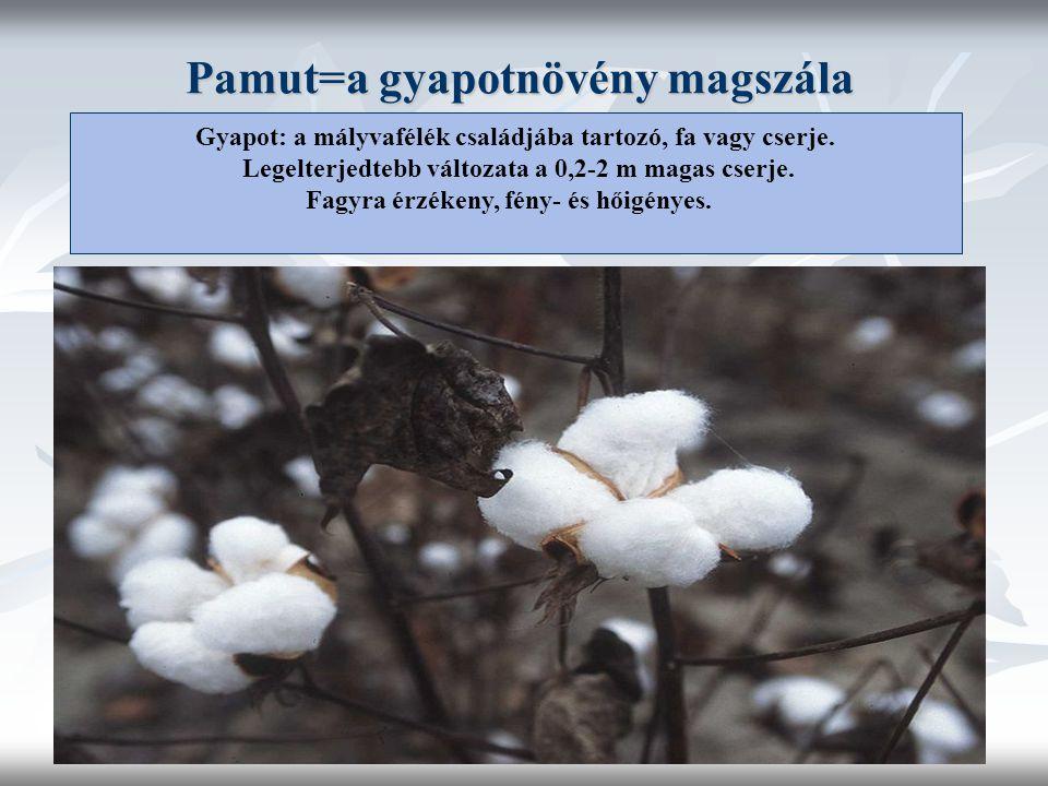 Pamut=a gyapotnövény magszála