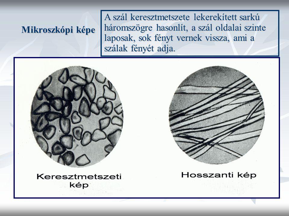 Mikroszkópi képe