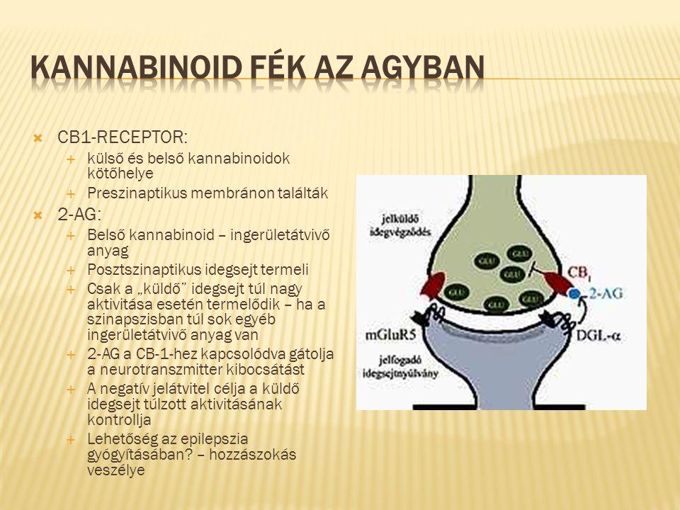 Kannabinoid fék az agyban