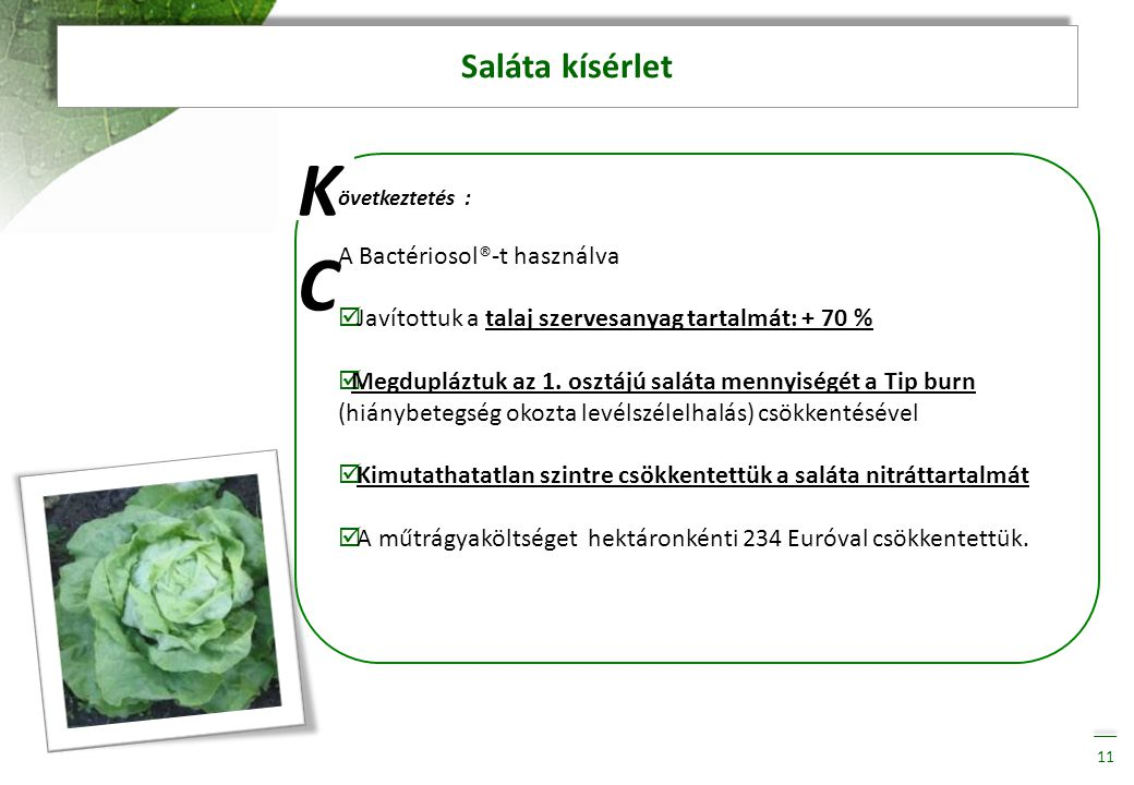 K C Saláta kísérlet A Bactériosol®-t használva