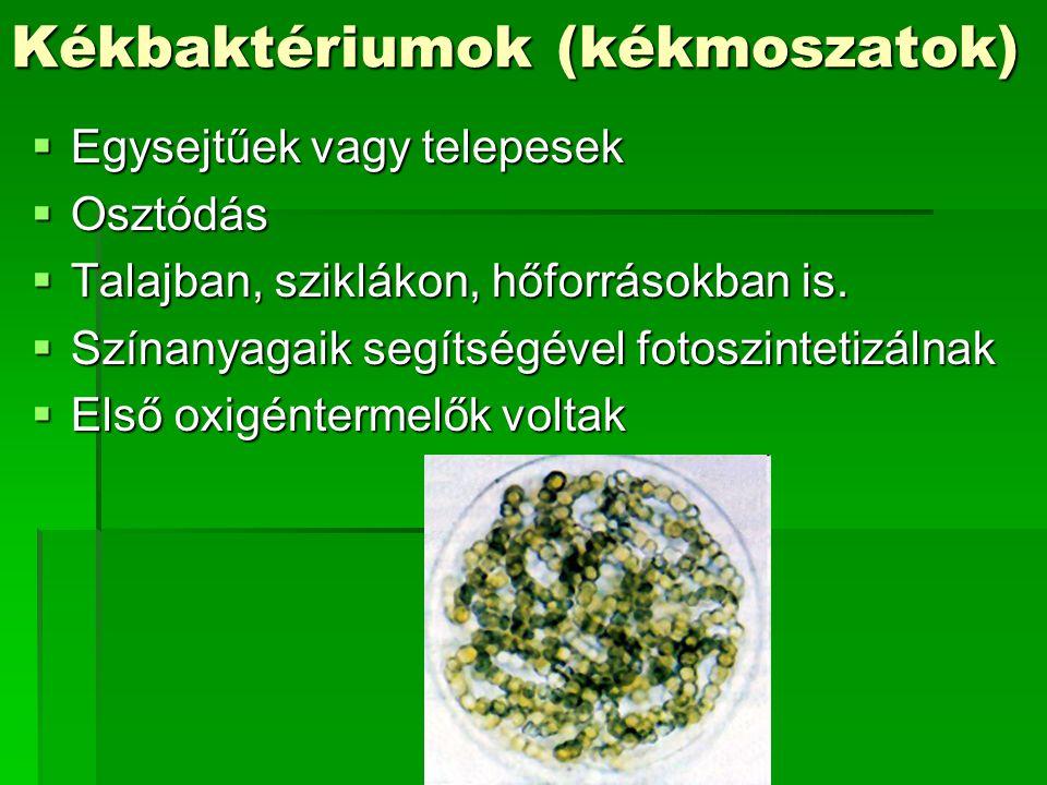 Kékbaktériumok (kékmoszatok)
