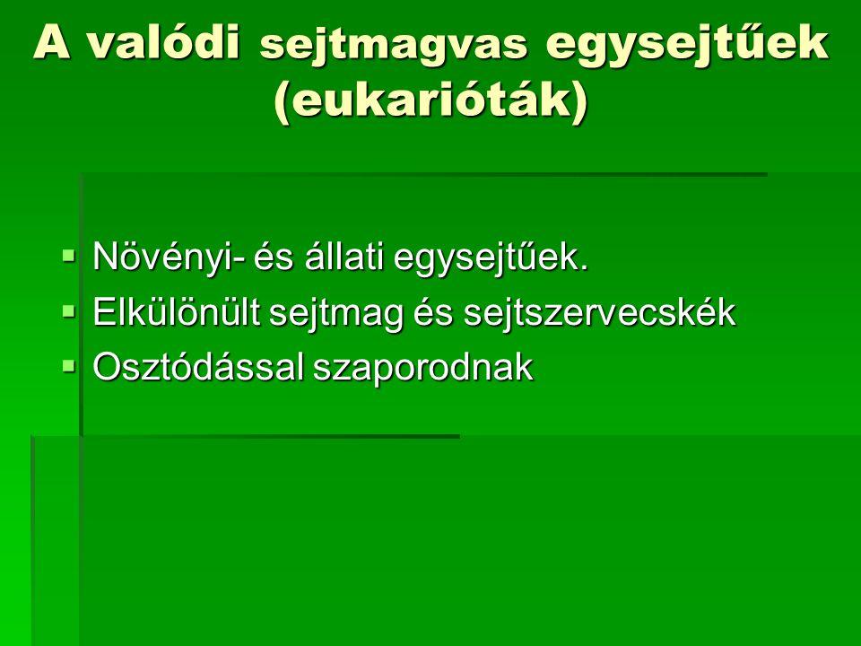 A valódi sejtmagvas egysejtűek (eukarióták)