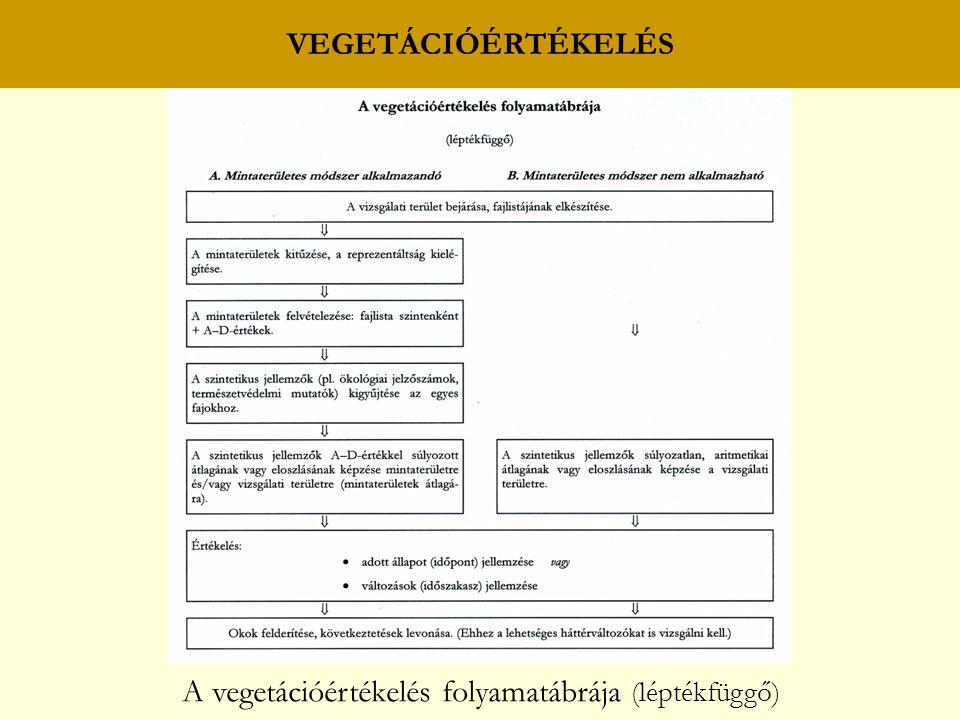 A vegetációértékelés folyamatábrája (léptékfüggő)