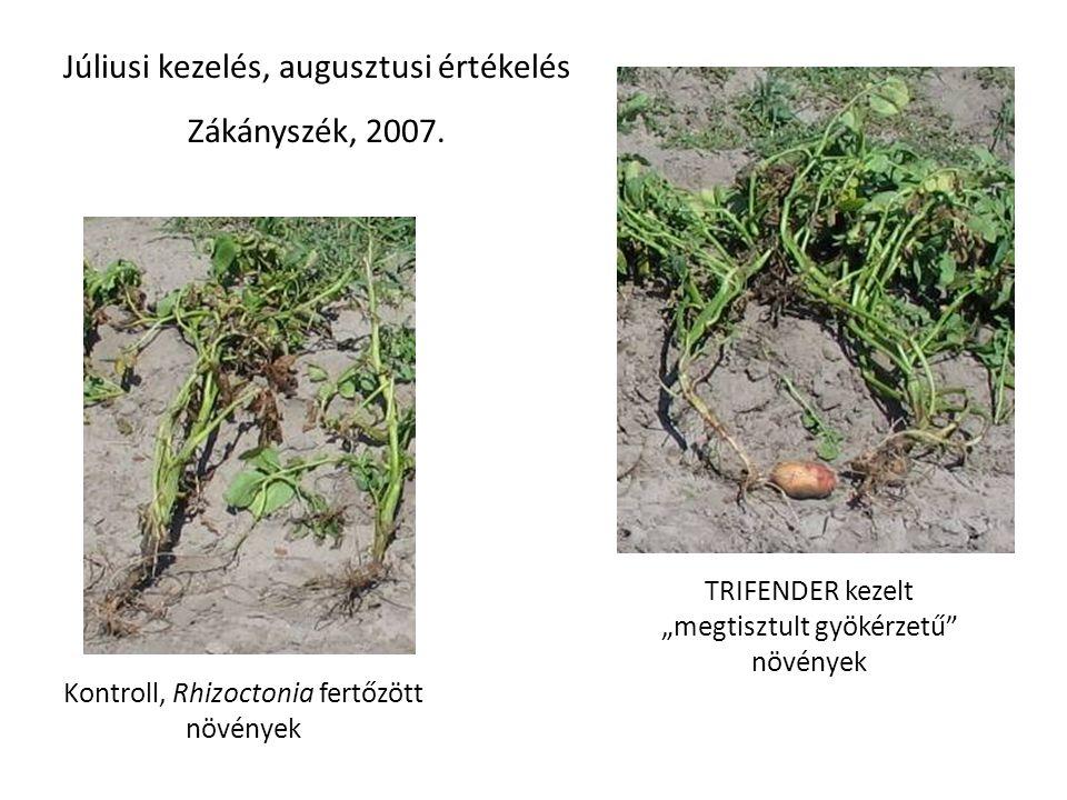 Kontroll, Rhizoctonia fertőzött növények