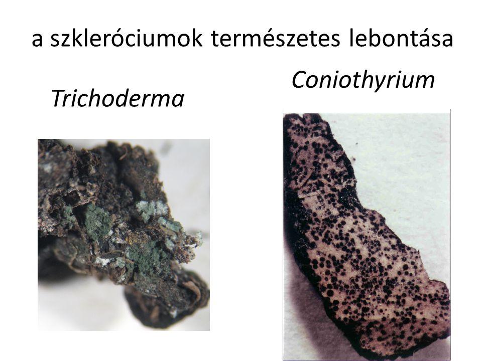 a szkleróciumok természetes lebontása
