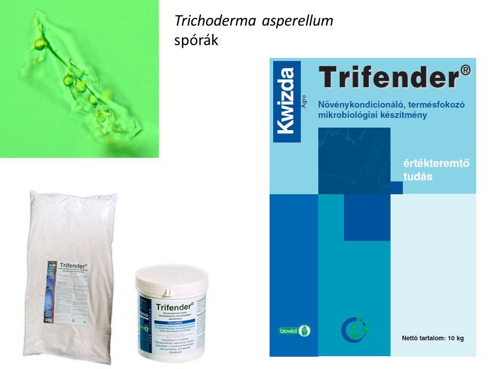 Trichoderma asperellum spórák