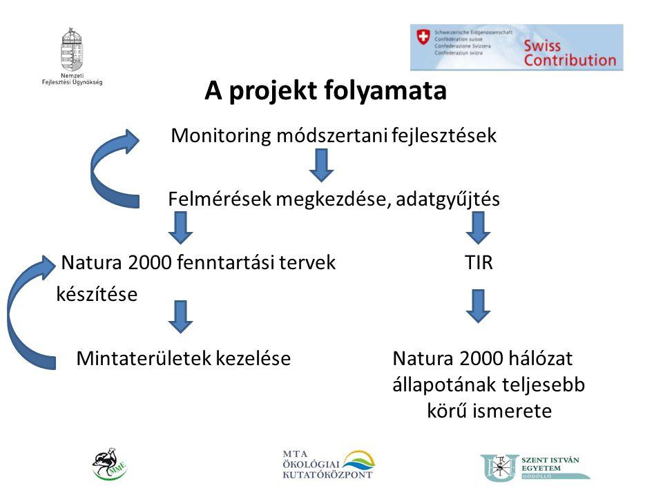 A projekt folyamata Monitoring módszertani fejlesztések