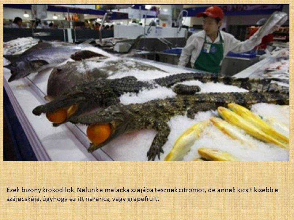 Ezek bizony krokodilok