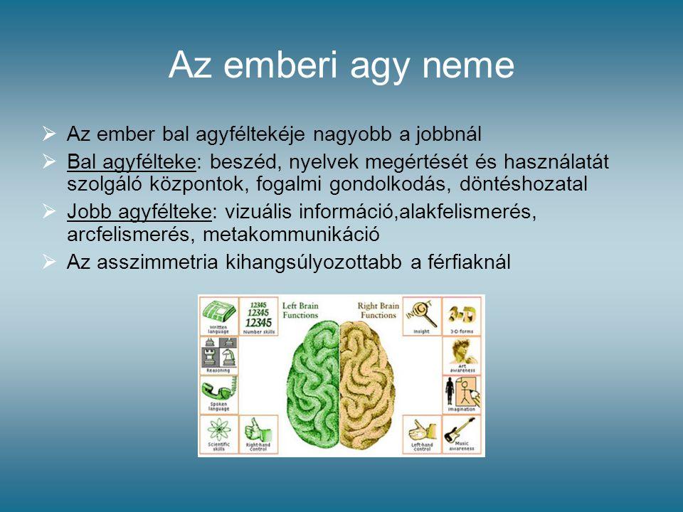 Az emberi agy neme Az ember bal agyféltekéje nagyobb a jobbnál