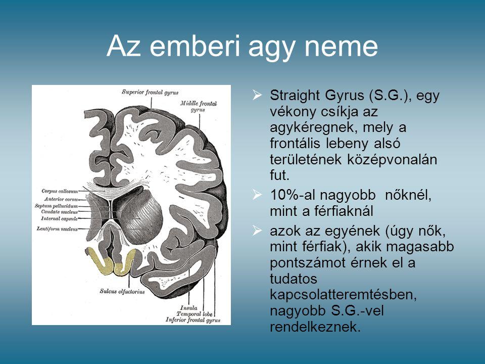 Az emberi agy neme Straight Gyrus (S.G.), egy vékony csíkja az agykéregnek, mely a frontális lebeny alsó területének középvonalán fut.