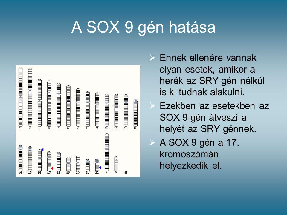 A SOX 9 gén hatása Ennek ellenére vannak olyan esetek, amikor a herék az SRY gén nélkül is ki tudnak alakulni.
