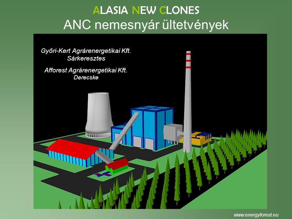 ALASIA NEW CLONES ANC nemesnyár ültetvények