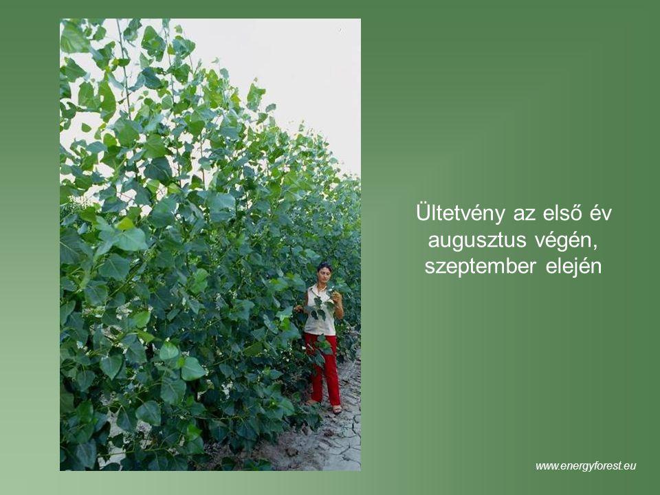 Ültetvény az első év augusztus végén, szeptember elején