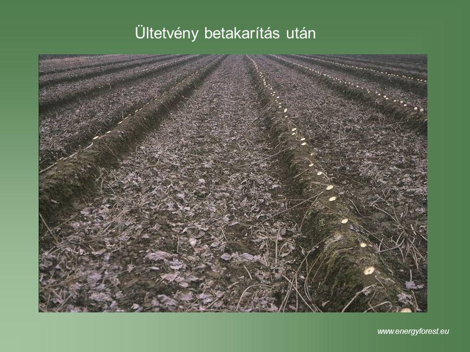 Ültetvény betakarítás után