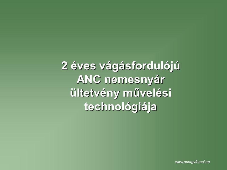 2 éves vágásfordulójú ANC nemesnyár ültetvény művelési technológiája