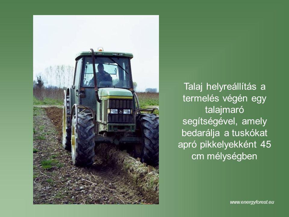 Talaj helyreállítás a termelés végén egy talajmaró segítségével, amely bedarálja a tuskókat apró pikkelyekként 45 cm mélységben