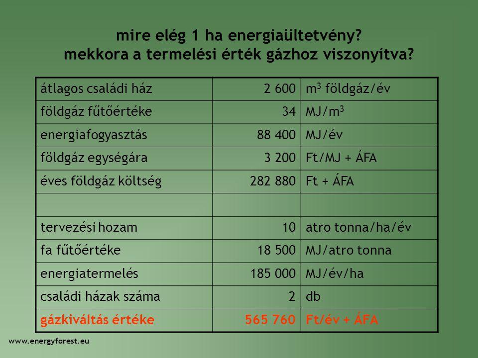 mire elég 1 ha energiaültetvény