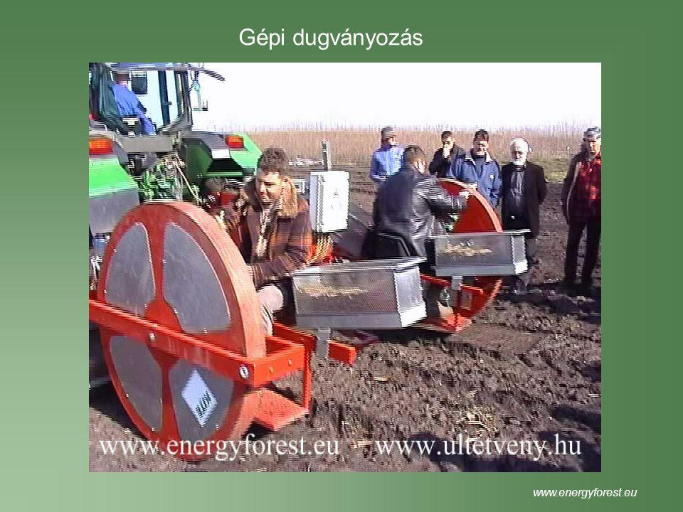 Gépi dugványozás www.energyforest.eu