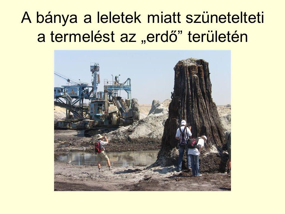 """A bánya a leletek miatt szünetelteti a termelést az """"erdő területén"""