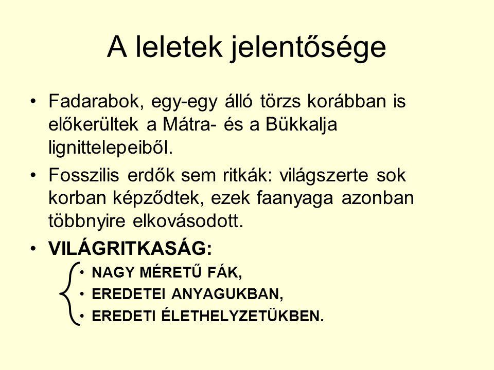 A leletek jelentősége Fadarabok, egy-egy álló törzs korábban is előkerültek a Mátra- és a Bükkalja lignittelepeiből.