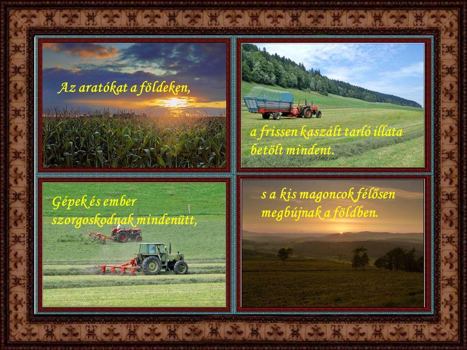 Az aratókat a földeken, a frissen kaszált tarló illata betölt mindent. s a kis magoncok félősen megbújnak a földben.