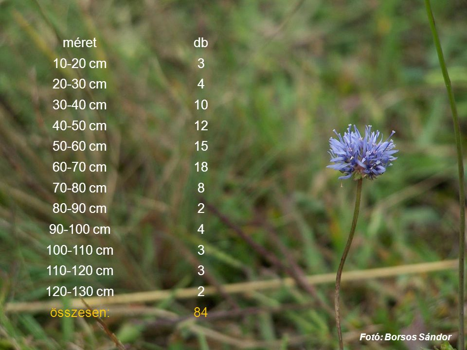 méret db 10-20 cm 3 20-30 cm 4 30-40 cm 10 40-50 cm 12 50-60 cm 15