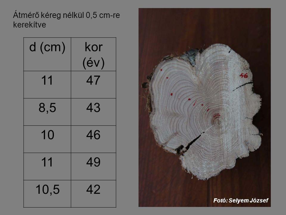 Átmérő kéreg nélkül 0,5 cm-re kerekítve