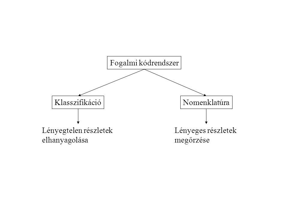 Fogalmi kódrendszer Klasszifikáció. Nomenklatúra. Lényegtelen részletek. elhanyagolása. Lényeges részletek.