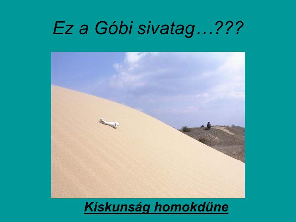 Ez a Góbi sivatag… Kiskunság homokdűne