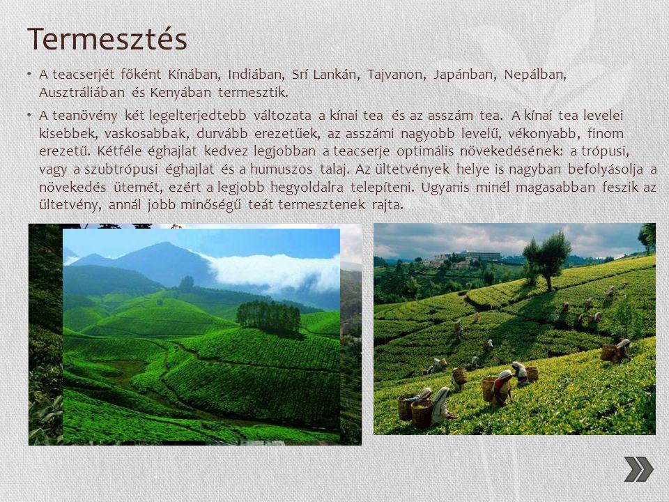 Termesztés A teacserjét főként Kínában, Indiában, Srí Lankán, Tajvanon, Japánban, Nepálban, Ausztráliában és Kenyában termesztik.