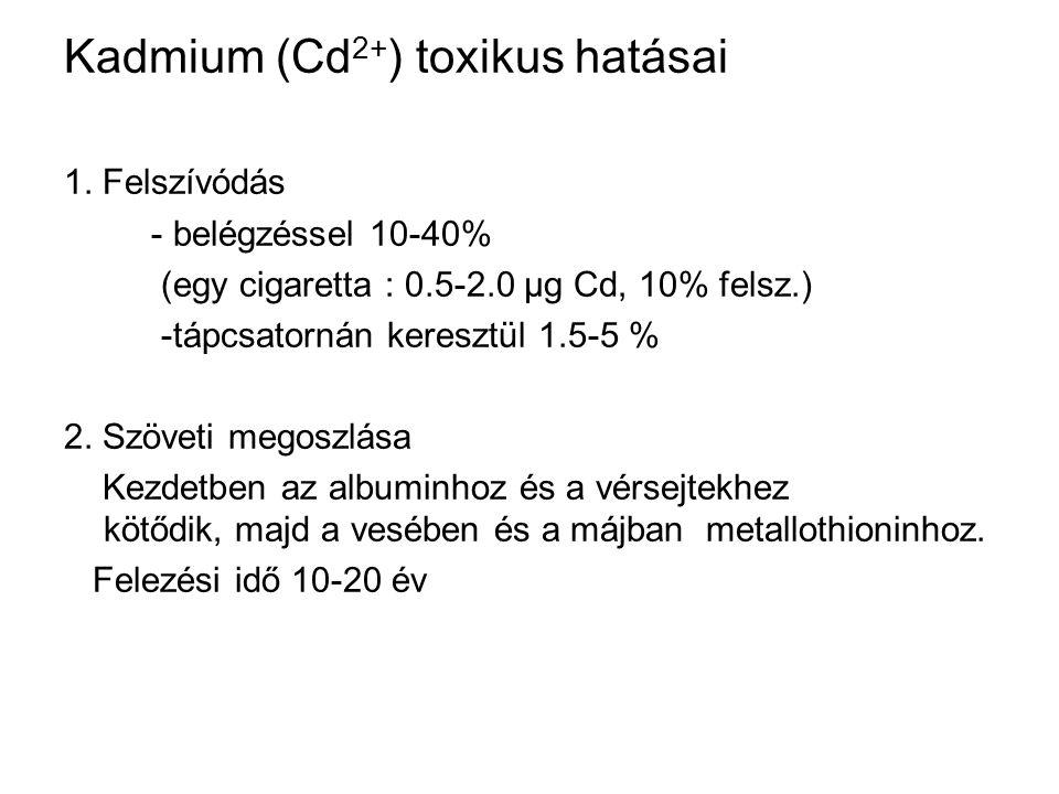 Kadmium (Cd2+) toxikus hatásai