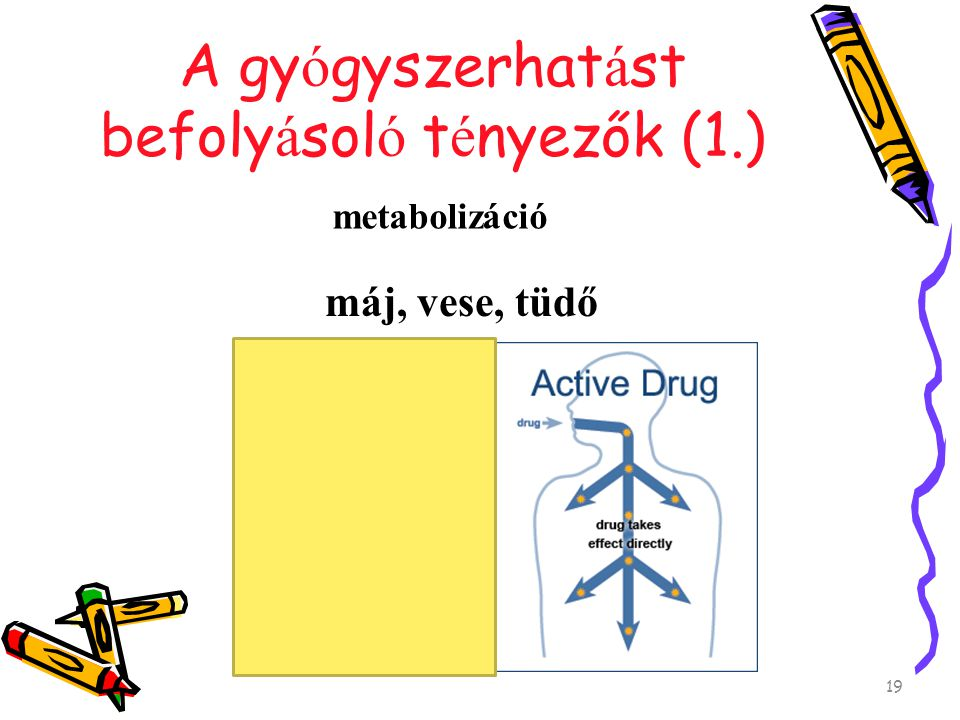 A gyógyszerhatást befolyásoló tényezők (1.)