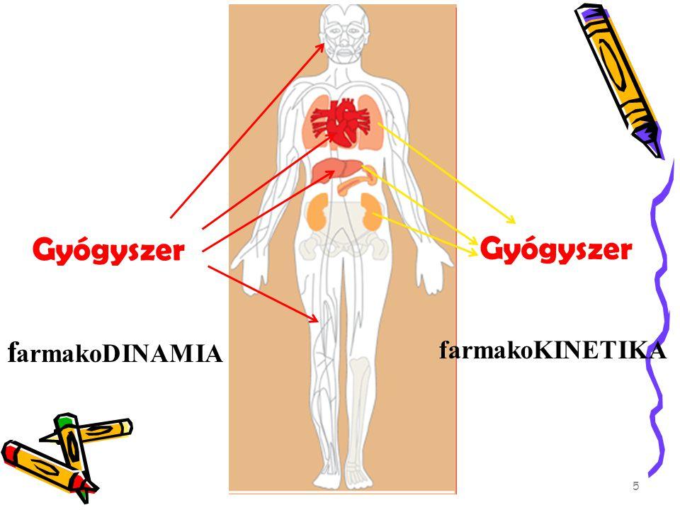 Gyógyszer Gyógyszer farmakoDINAMIA farmakoKINETIKA