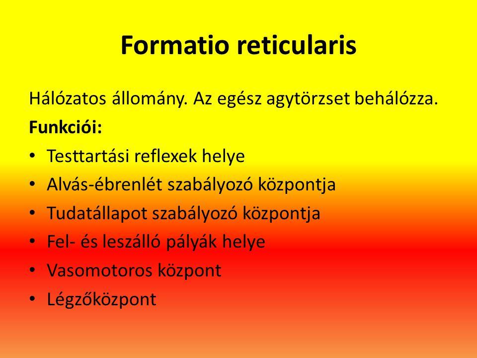 Formatio reticularis Hálózatos állomány. Az egész agytörzset behálózza. Funkciói: Testtartási reflexek helye.