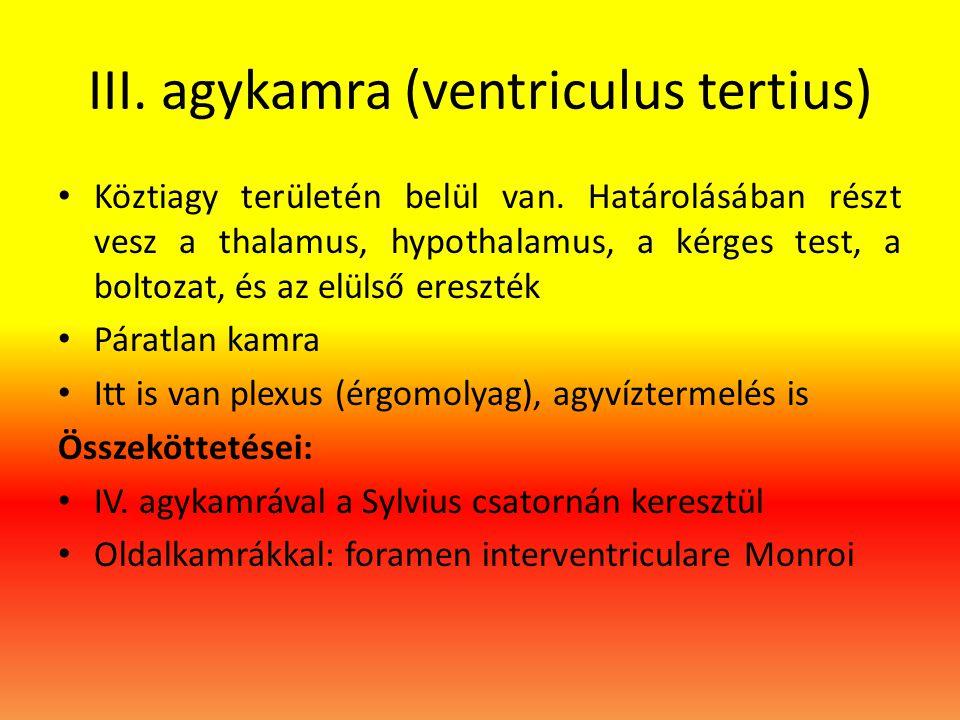 III. agykamra (ventriculus tertius)