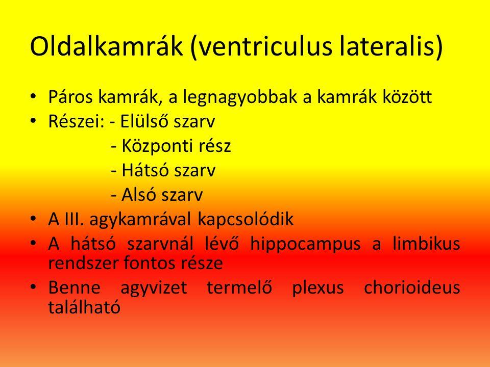 Oldalkamrák (ventriculus lateralis)