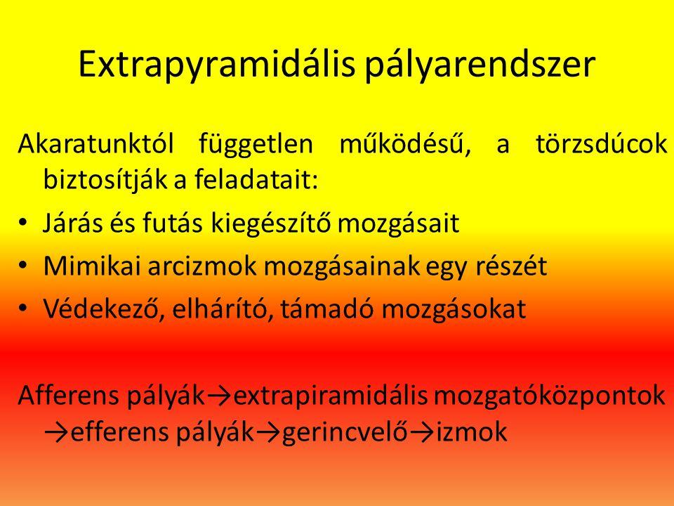 Extrapyramidális pályarendszer