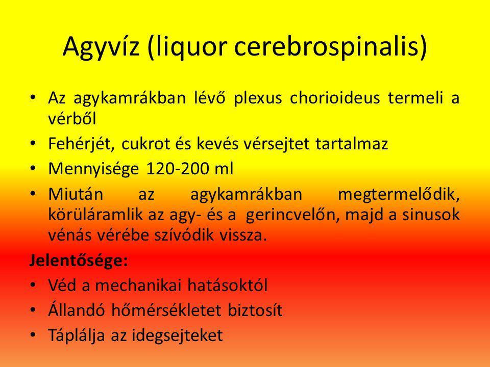 Agyvíz (liquor cerebrospinalis)
