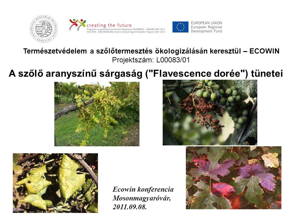 Természetvédelem a szőlőtermesztés ökologizálásán keresztül – ECOWIN