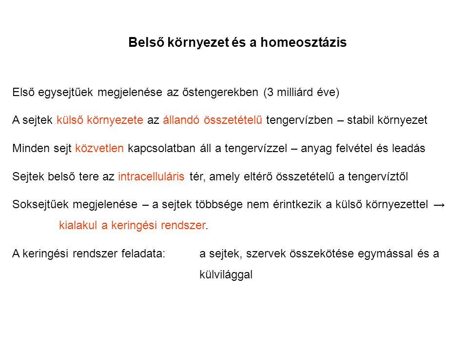 Belső környezet és a homeosztázis