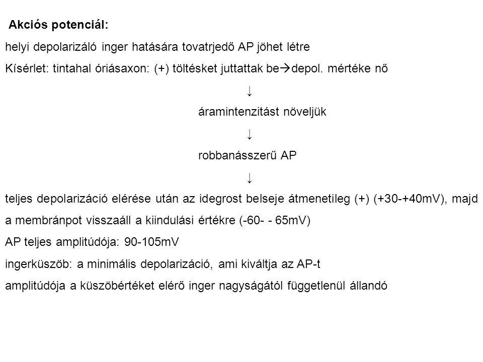 Akciós potenciál: helyi depolarizáló inger hatására tovatrjedő AP jöhet létre.