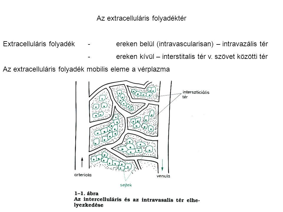 Az extracelluláris folyadéktér