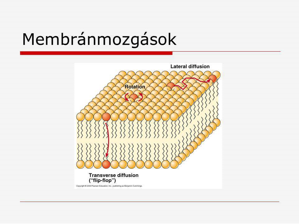 Membránmozgások