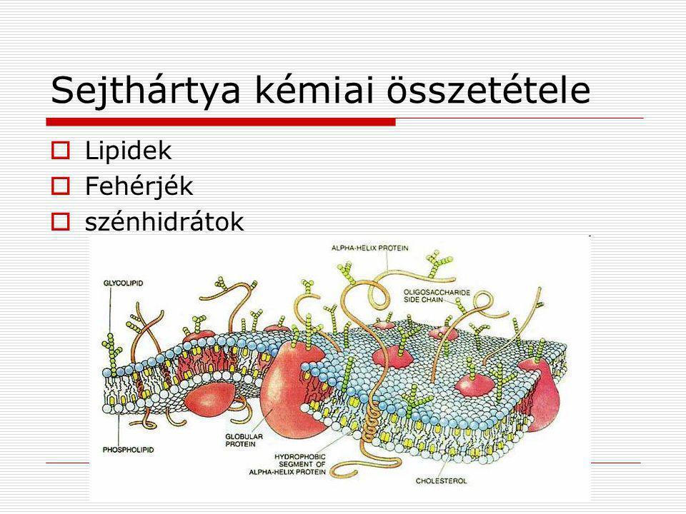 Sejthártya kémiai összetétele